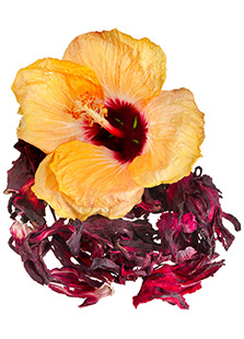 Piping Rock Hibiscus Organic Tea
