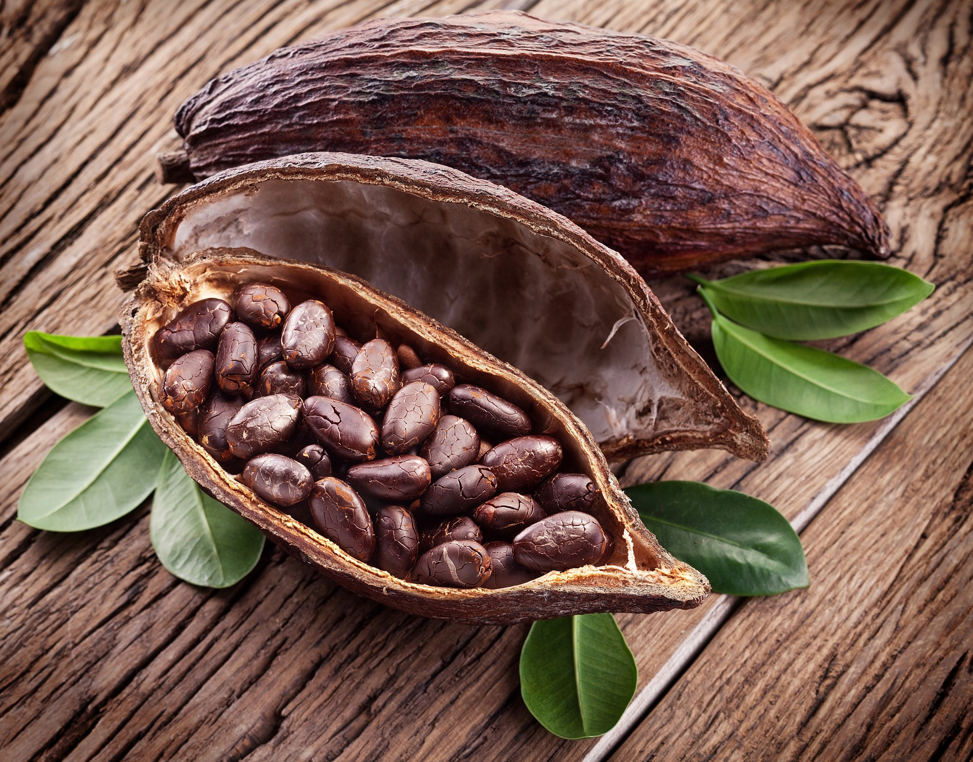 Piping Rock Cacao Essential Oil