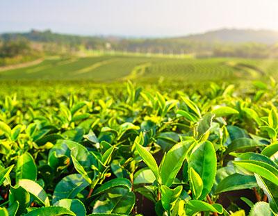Sourcing Environmental Responsibility